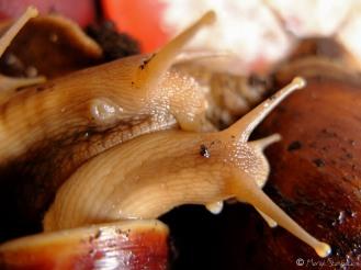 Ślimaki / Snails