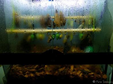 Muzeum motyli - bardzo, bardzo polecam :) Tu - wylęgarnia