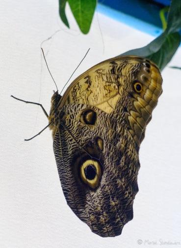 Muzeum motyli