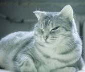 Ciepły kot na tle ciepłego kaloryfera w ciepłym pokoju...